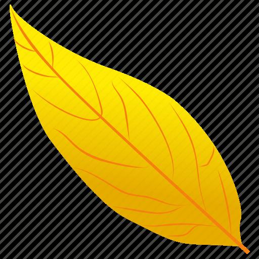 autumn leaf, foliage, leaf, leaf in fall, yellow birch icon