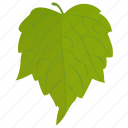 birch leaf, foliage, leaf, paper birch, river birch icon