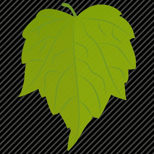 birch leaf, foliage, leaf, paper birch, river birch icon