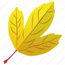 autumn leaf, foliage, leaf, leaf in fall, yellow leaf icon