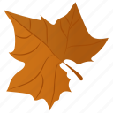 autumn leaf, foliage, leaf, leaf in fall, maple leaf icon
