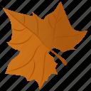 autumn leaf, foliage, leaf, leaf in fall, maple leaf icon
