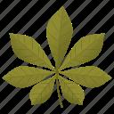 aesculus hippocastanum, chestnut leaf, foliage, horse chestnut, leaf icon