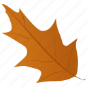 autumn leaf, foliage, leaf in fall, mistletoe leaf, oak leaf icon