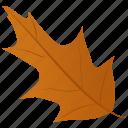 autumn leaf, foliage, leaf in fall, mistletoe leaf, oak leaf icon