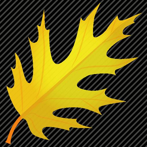autumn leaf, leaf in fall, oak leaf, quercus coccinea, scarlet oak icon