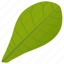 common milkweed, foliage, green leaf, leaf, milkweed leaf icon