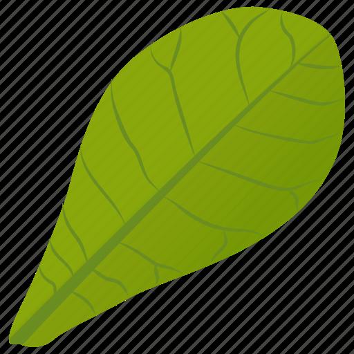 common milkweed, foliage, green leaf, leaf, milkweed leaf icon