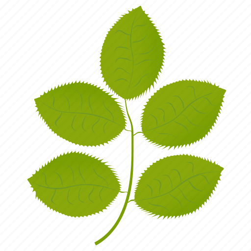 foliage, green leaves, hickory leaves, leafy twig, leaves icon
