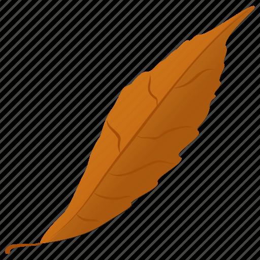 autumn leaf, fall leaf, foliage, generic leaf, leaf icon