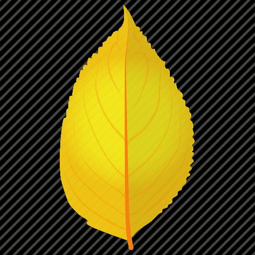 autumn leaf, birch leaf, foliage, leaf in fall, yellow birch icon