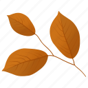 autumn leaf, foliage, leaf in fall, leafy twig, leaves icon