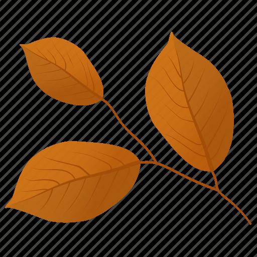 autumn leaf, foliage, leaf in fall, leafy twig, leaves icon
