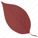 autumn leaf, dogwood in fall, dogwood leaf, fall foliage, leaf in fall icon