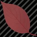 autumn leaf, dogwood in fall, dogwood leaf, fall foliage, leaf in fall icon