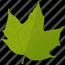 green leaf, leaf, autumn leaf, foliage, maple leaf
