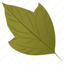 acer rubrum, autumn leaf, foliage, leaf, swamp maple icon