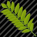 ash leaf, foliage, leaf, leafy twig, sumac leaf icon