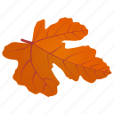 autumn leaf, field maple, foliage, leaf in fall, maple leaf icon