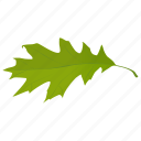 fall leaf, foliage, green leaf, leaf, oak leaf icon