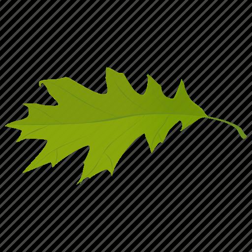 fall leaf, foliage, green leaf, leaf, oak leaf icon