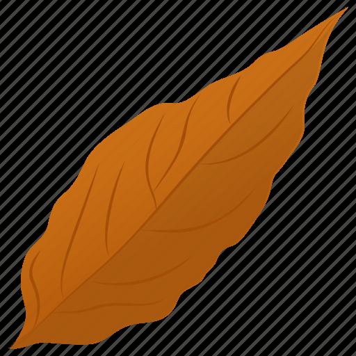 autumn leaf, foliage, leaf, leaf in fall, magnolia leaf icon
