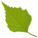 aspen leaf, birch leaf, foliage, green leaf, leaf icon