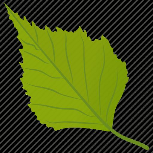 aspen leaf, birch leaf, foliage, green leaf, leaf icon