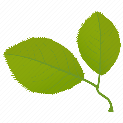 cherry leaves, fall leaves, foliage, leaves, simple leaves icon