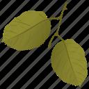 foliage, green leaves, leafy twig, quaking aspen icon