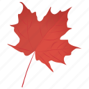 autumn leaf, foliage, leaf in fall, maple leaf, red maple icon