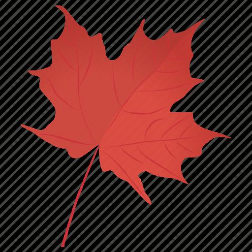 autumn leaf, foliage, leaf in fall, maple leaf, red maple icon