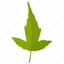 amur maple, foliage, green leaf, leaf, maple leaf icon