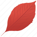 aronia leaf, autumn leaf, foliage, leaf, leaf in fall icon