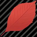 aronia leaf, autumn leaf, foliage, leaf, leaf in fall icon
