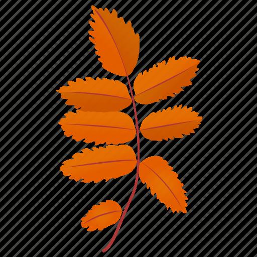 ash leaves, autumn leaf, foliage, leaf in fall, leafy twig icon