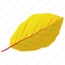 autumn leaf, birch leaf, foliage, leaf in fall, yellow birch icon