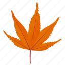 autumn leaf, foliage, japanese maple, leaf in fall, maple leaf icon