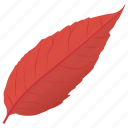 autumn leaf, beech leaf, copper beech, fall leaf, purple beech icon