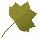 foliage, leaf, liriodendron tulipifera, tulip leaf, yellow poplar icon