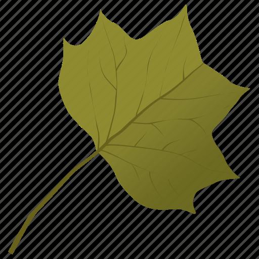 foliage, leaf, liriodendron tulipifera, tulip leaf, yellow poplar icon