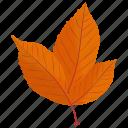 american beech, autumn leaf, foliage, leaf in fall, leafy twig icon