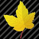 autumn leaf, foliage, leaf, leaf in fall, yellow leaf