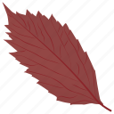 american hornbeam, autumn leaf, foliage, leaf, leaf in fall icon
