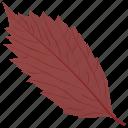american hornbeam, autumn leaf, foliage, leaf, leaf in fall