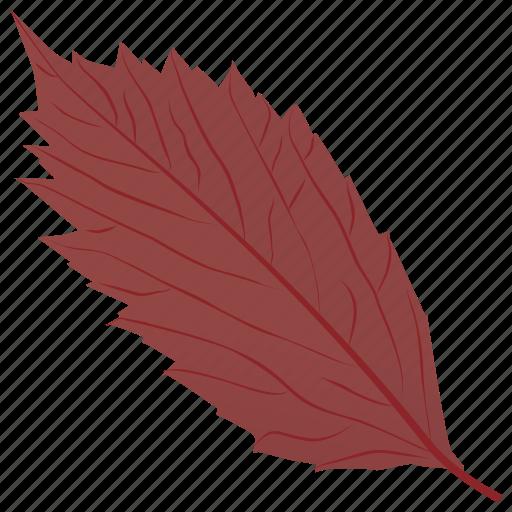 american hornbeam, autumn leaf, foliage, leaf, leaf in fall icon