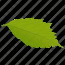 american hornbeam, foliage, generic leaf, green leaf, leaf icon