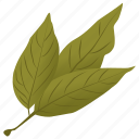 ash leaves, foliage, green leaves, leafy twig icon