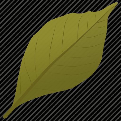 ash leaf, foliage, green leaf, leaf, simple leaf icon