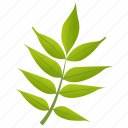 foliage, green leaves, leafy twig, leaves, sorbus americana icon